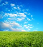 niebieski pole przez niebo pszenicą Fotografia Royalty Free