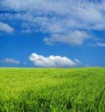 niebieski pole przez niebo pszenicą Zdjęcie Royalty Free