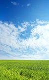 niebieski pole przez niebo pszenicą Obrazy Stock