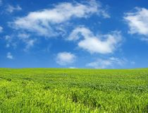 niebieski pole przez niebo pszenicą Obraz Royalty Free