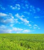 niebieski pole przez niebo pszenicą Obraz Stock