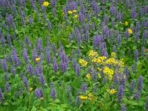 niebieski rozkwita wiosna Obraz Stock