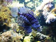 niebieski ryb Obraz Stock