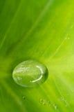 4 niebieski tła kropli wody liści makro Obraz Royalty Free