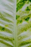 4 niebieski tła kropli wody liści makro Zdjęcie Stock