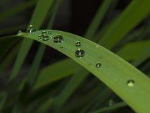4 niebieski tła kropli wody liści makro Zdjęcia Stock