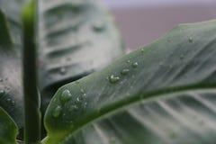 4 niebieski tła kropli wody liści makro Obrazy Royalty Free
