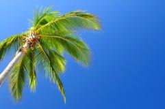 niebieski tła palm niebo obraz royalty free