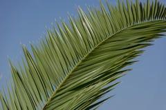 niebieski tła palm niebo Zdjęcie Royalty Free