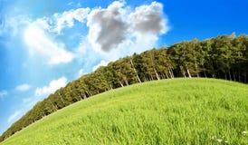 niebieski trawę w niebo Fotografia Royalty Free