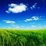 niebieski zachmurzone trawy pola zielone niebo zdjęcia stock