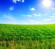niebieski zachmurzone trawy pola zielone niebo Obrazy Royalty Free