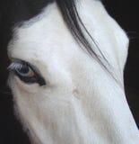niebieski zezowaty konia Zdjęcia Royalty Free