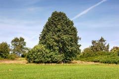 niebieskich nieb drzewa Zdjęcia Royalty Free
