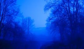 niebieskie drzewa Fotografia Stock