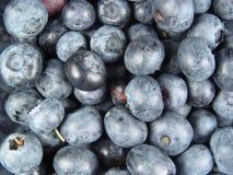 niebieskie jagody zdjęcie stock