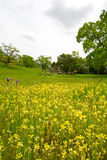niebieskie masła jaj wildflowers fiuty Fotografia Stock