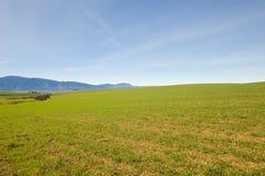 niebieskie nieba zimy zielonych pól Zdjęcia Royalty Free