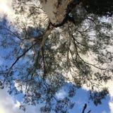 Niebieskie niebo bielu zielone drzewne chmury obraz stock
