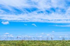 Niebieskie Niebo dla białej chmury pierzastej jak chmury pod trawą i polem i tła, Zdjęcia Royalty Free