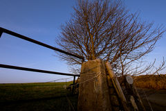 Niebieskie niebo, drzewo i brama w Szczytowym Gromadzkim parku narodowym, UK Zdjęcie Stock
