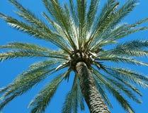 niebieskie niebo drzewo palm Obrazy Royalty Free