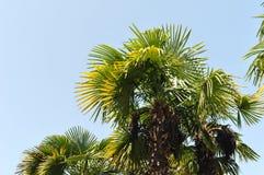 niebieskie niebo drzewo palm Fotografia Royalty Free