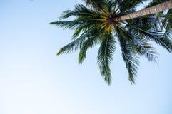niebieskie niebo drzewo palm Zdjęcia Stock