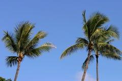 niebieskie niebo Hawaii palmowi drzewa zdjęcia stock