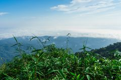 Niebieskie niebo i chmura z łąkowym drzewem Równiny krajobrazowy tło obrazy stock