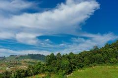 Niebieskie niebo i chmura z łąkowym drzewem Równiny krajobrazowy tło zdjęcie royalty free