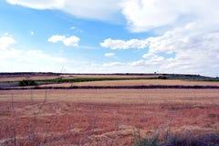Niebieskie niebo i czerwieni trawa Obrazy Royalty Free