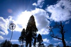 Niebieskie niebo i drzewa w Trentham uprawiamy ogródek blisko Podsycamy na Trencie, UK Zdjęcia Stock