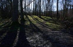 Niebieskie niebo i drzewa w Trentham uprawiamy ogródek blisko Podsycamy na Trencie, UK Obraz Royalty Free