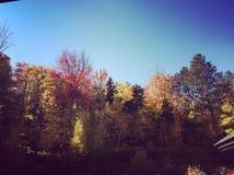 Niebieskie niebo i kolorowi drzewa Zdjęcia Stock
