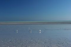 Niebieskie niebo i skorupa pstrząca plaża przy osiemdziesiąt mil plażą Obraz Stock