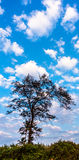 Niebieskie niebo i sylwetka drzewo Obrazy Royalty Free