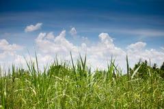 Niebieskie Niebo i trawa Obraz Stock