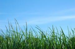 Niebieskie niebo i zielona trawa Zdjęcia Royalty Free