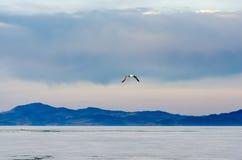 Niebieskie niebo, jezioro z górą i flaying seagull, zdjęcie stock