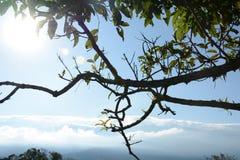 niebieskie niebo kwitnie na drodze Obraz Stock