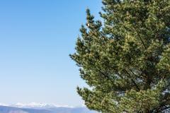 Niebieskie niebo nad śnieżną górą z drzewem zdjęcia royalty free