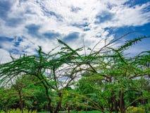 Niebieskie niebo nad drzewami Obraz Royalty Free