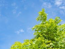 Niebieskie niebo nad drzewami Obrazy Royalty Free