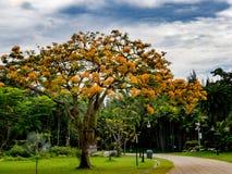 Niebieskie niebo nad drzewo Zdjęcia Royalty Free