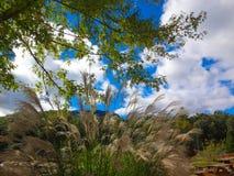 Niebieskie niebo nad jeziora nęcenie Fotografia Stock