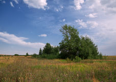 Niebieskie niebo nad lata polem Zdjęcia Stock