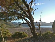 Niebieskie niebo nad morzem z pięknym drzewem fotografia stock