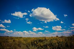 Niebieskie niebo nad polem kwiaty zdjęcie stock