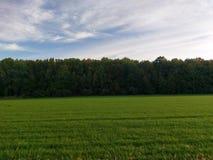 Niebieskie Niebo nad Zielonymi drzewami Zdjęcia Royalty Free
